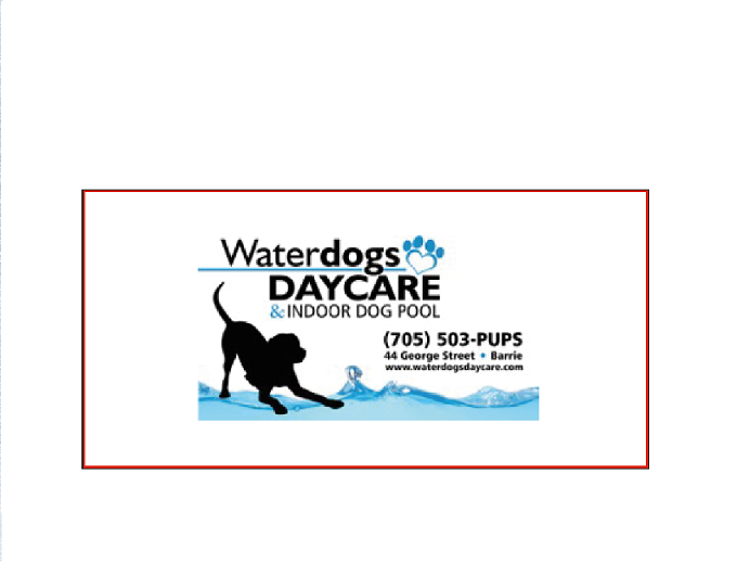 Waterdogs Daycare